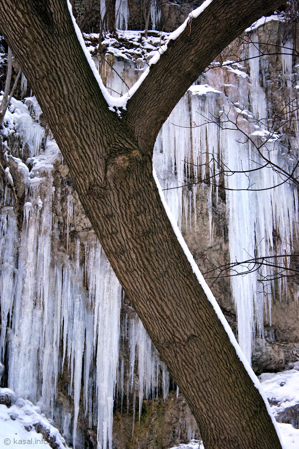 Tree with icefall