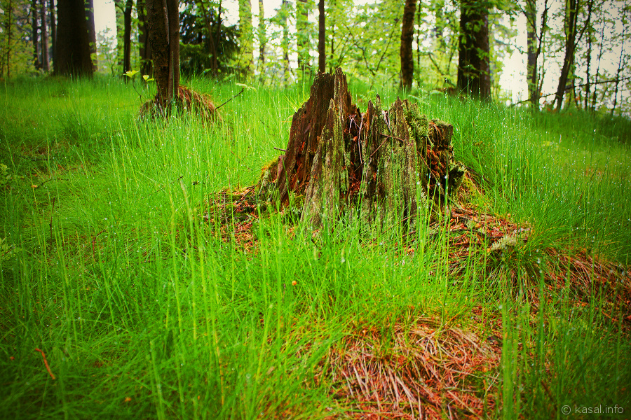 Stump in green grass