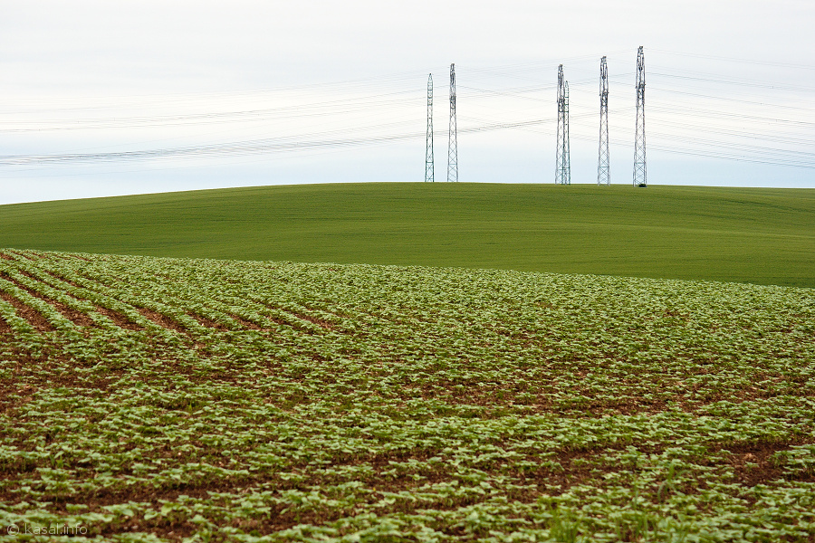 Electricity pylons in waves of field