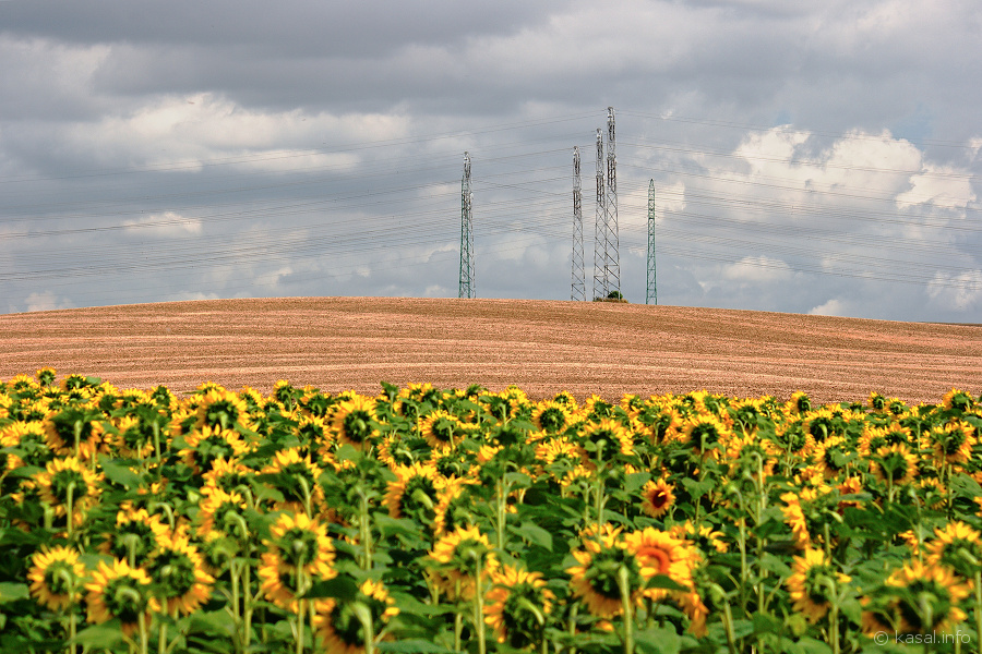 Electricity pylons with sunflowers